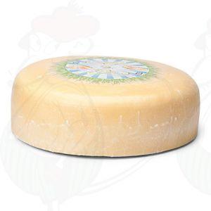 Jung gereifter Bio Käse | Ganzer Käse 7,5 Kilo | Premium Qualität