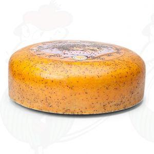 Mustard Cheese - Gouda | Premium Quality | Entire cheese 9,2 kilos / 20.2 lbs